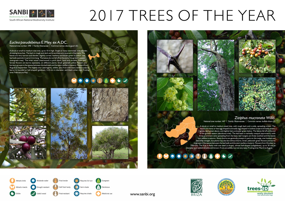 2017-Trees-of-the-year-poster-1