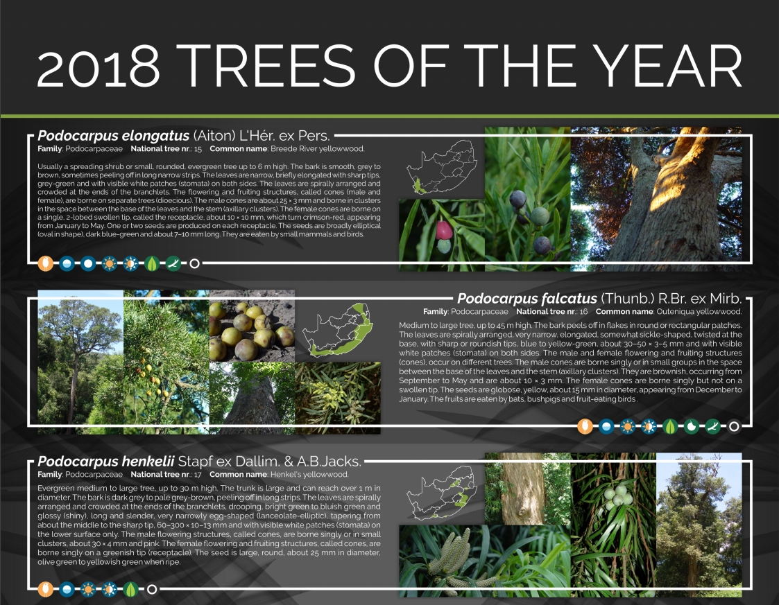 Dendro 2018 Trees of the year