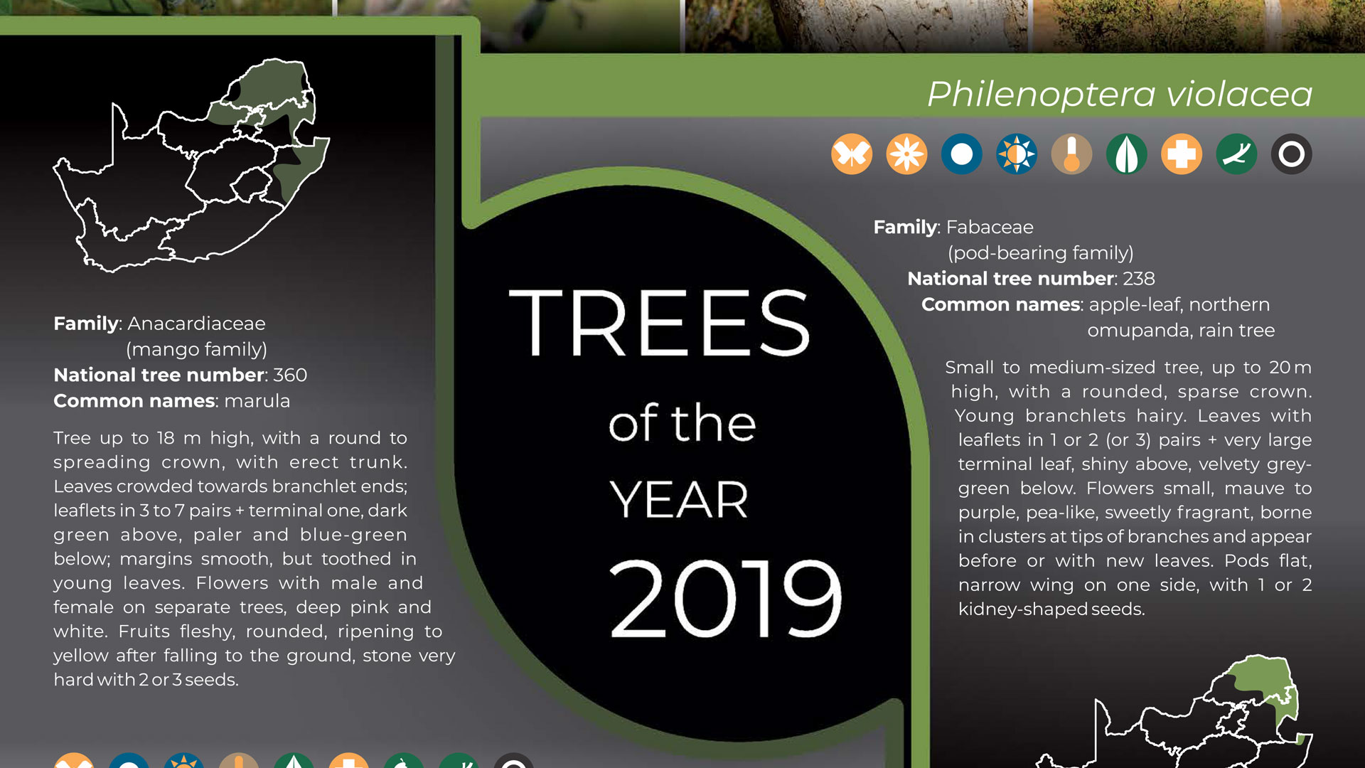 2-h-2019-Trees-of-the-year-poster